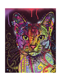 Abyssinian Giclee Print by Dean Russo