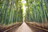 Bamboo Forest of Kyoto, Japan. Photographic Print by  SeanPavonePhoto