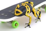 Frog on a Skateboard Fotografisk tryk