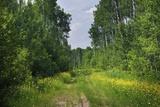 Countryside Road Reproduction photographique par  duallogic