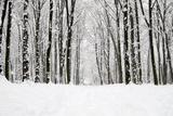 Beautiful Winter Forest  and the Road Fotografisk trykk av Vitaliy Pakhnyushchyy