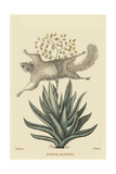Flying Squirrel Posters por Mark Catesby