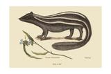 Polcat Lámina giclée prémium por Catesby, Mark