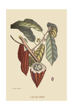 Cacao or Chocolate Tree Posters por Mark Catesby