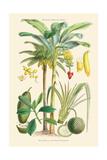 Plants Used as Food. Date, Banana, Jack Fruit, Pandanus Posters by William Rhind