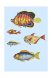 Rarest Curiosities of the Fish of the Indies Art by Louis Renard