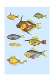 Rarest Curiosities of the Fish of the Indies Prints by Louis Renard