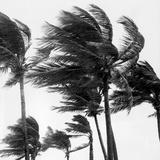 Florida Flora Fotografisk tryk af Three Lions