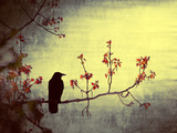 Crow Sitting on a Branch in a Flower Blossom Tree Reproduction photographique par Wim Koopman