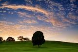 Lonely Tree Fotografisk tryk af Robert Koehler