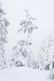 Snowy Forest in Lapland, Finlanc Photographic Print by  Risto0