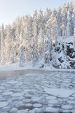Icy Water in Snowy Forest Fotografisk trykk av  Risto0
