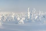 Snowy Forest in Lapland, Finland Fotografisk trykk av  Risto0