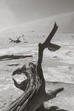 Desolation in the Namib Desert Fotografisk tryk af  asiercu