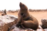 Seal Scratching Fotografie-Druck von  photogerbil