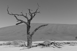Another Lone Tree in the Namib Desert Fotografisk tryk af  asiercu