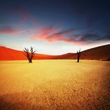 Dead Valley in Namibia Fotografisk tryk af Andrushko Galyna