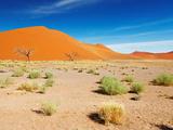 Sand Dunes of Namib Desert, Sossusvlei, Namibia Fotografisk trykk av  DmitryP