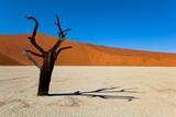 Namib Desert, Sossusvlei, Namibia Reproduction photographique par  DR_Flash