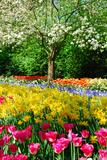 Colorful Springflowers and Blossom in Dutch Spring Garden 'Keukenhof' in Holland Fotografie-Druck von  dzain
