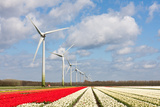 Big Dutch Colorful Tulip Fields with Wind Turbines Photographic Print by  kruwt