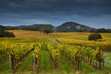 Alexander Valley Photographic Print by RMB Images / Photography by Robert Bowman