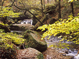 Forest Brook in Autumn Impressão fotográfica por Hans Peter Merten