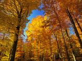 Woodland in Autumn Impressão fotográfica por Hans Peter Merten