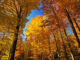 Woodland in Autumn Photographic Print by Hans Peter Merten