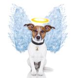 Angel Dog Feather Wings Aura Nimbus Reproduction photographique par Javier Brosch