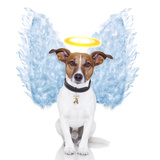 Angel Dog Feather Wings Aura Nimbus Photographic Print by Javier Brosch