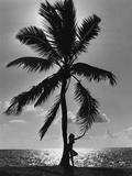 Florida Sunset Fotografisk tryk af Archive Photos