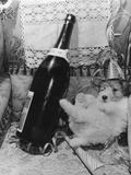 Drunken Dog Reproduction photographique par Fox Photos