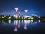 Singapore Garden by Bay Super-Trees Photographic Print by  Tomatoskin