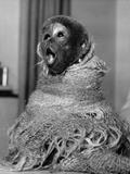 Woolly Monkey Stampa fotografica di William Vanderson