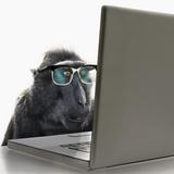Monkey Wearing Spectacles Using Laptop Computer Fotografie-Druck von Andrew Bret Wallis