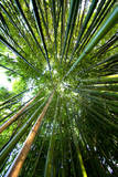Bamboo Photographic Print by stevejack photos