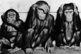 Three Wise Monkeys Fotografisk tryk af  Keystone