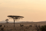 Acacia and Baobab Trees Photographic Print by Claudia Uribe