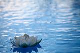 Artificial Water Lilly Fotografie-Druck von Alexandru Nika