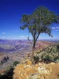 Grand Canyon, Arizona, United States Impressão fotográfica por Hans Peter Merten