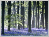 Bluebell Vision Framed Photographic Print by Doug Chinnery