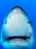 Shark Lámina fotográfica por Don Carpenter of eurisko Photography