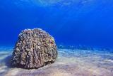Coral Head Fotografisk tryk af Chris Stankis