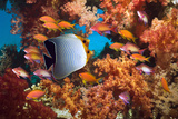 Coral Reef Scenery with Fish Reproduction photographique par Georgette Douwma