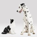 Portrait of Cat and Dog Photographic Print by Paul Bradbury