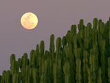 Full Moon Rising over Cacti Photographic Print by Achim Mittler, Frankfurt am Main