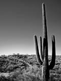 Cactus Saguaro Toile tendue sur châssis par Cameron Davidson