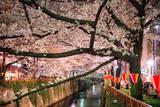 Sakura at Nakameguro Fotografisk trykk av By CaDs