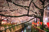 Sakura at Nakameguro Photographic Print by By CaDs